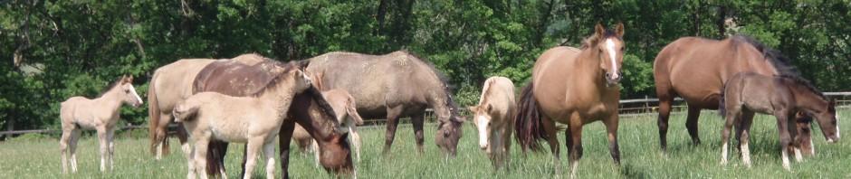 Les mères et leurs poulains